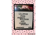 Lillipugs - Dogs And Puppies