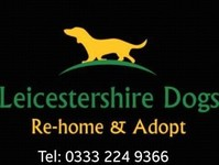 Leicestershire Dogs - Dogs And Puppies